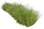 Cut out Wild Grass Other Vegetation Pennisetum 0001 | MrCutout.com