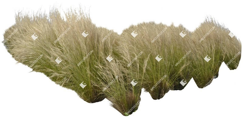 Cut out Wild Grass Other Vegetation Stipa 0001 preview