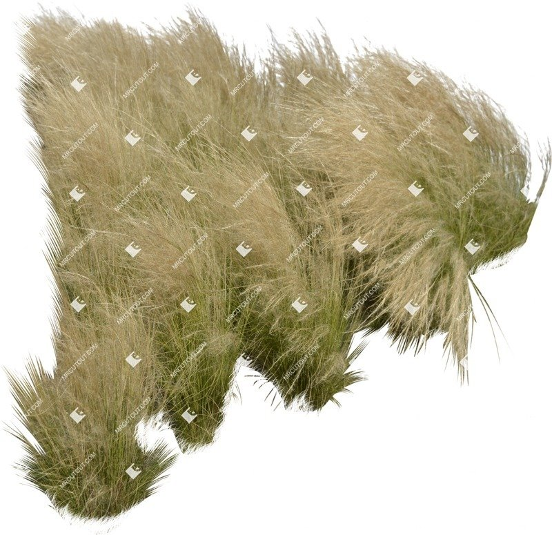 Cut out Wild Grass Stipa 0001 preview