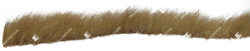 Cut out Wild Grass Stipa 0003 preview